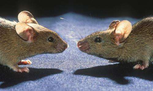 Viruses impaired if their targets have diverse genes