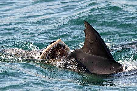Boaties need to be mindful of dolphins