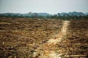 Making progress on deforestation