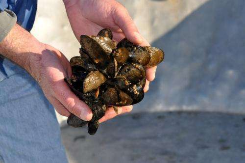 Ocean acidification a culprit in commercial shellfish hatcheries' failures