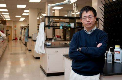 Researcher discovers inexpensive catalyst to produce oxygen and hydrogen gas