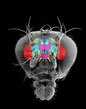 Researchers provide standardized nomenclature for the architecture of insect brains