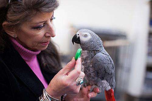 Research shows sharing tendencies in parrots