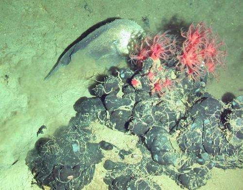 Scientists examine mysterious tar mounds in the West African deep ocean