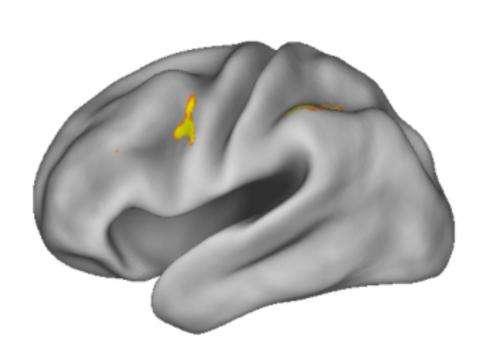Study reveals workings of working memory