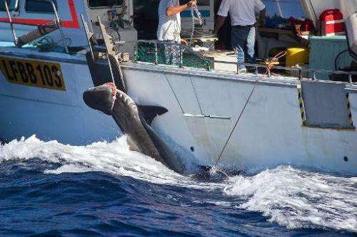 This handout image received on February 26, 2014 and taken on February 22 by the Sea Shepherd Australia Ltd / Animal Amnesty sho