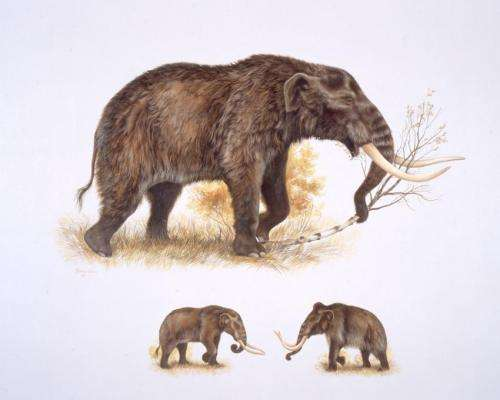 American mastodons made warm Arctic, subarctic temporary home 125,000 years ago