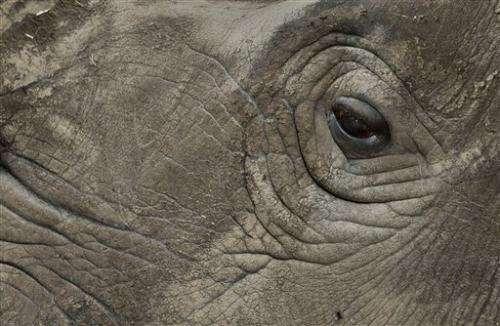 Rhino species to die unless science can help