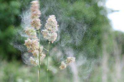 Scientists map the worst times of day for people allergic to grass pollen