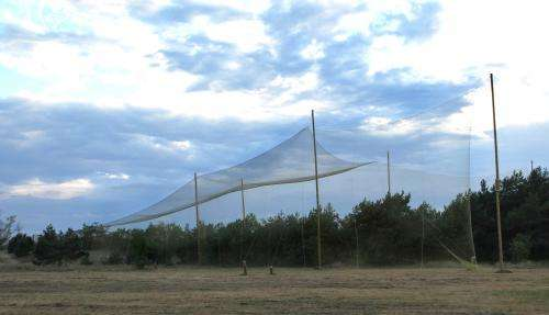 The world's first bat net for migrating bats is launched in Latvia