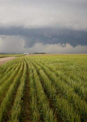 Climate change increases risk of crop slowdown in next 20 years