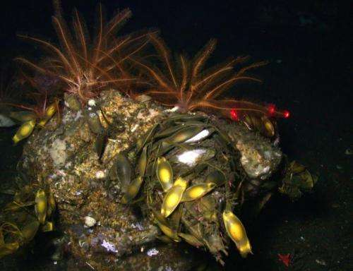 Scientists discover new coral species off California