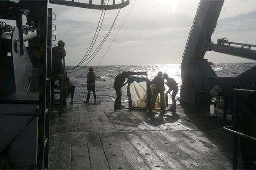 Marine biologist examining deep-sea vision on cruise to Barbados, Bahamas