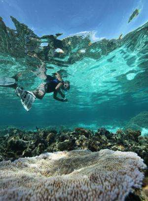 Marine scientist's quest to save coral
