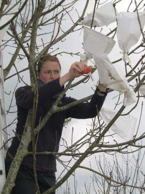 Research reveals first genetic clues to fight ash tree dieback