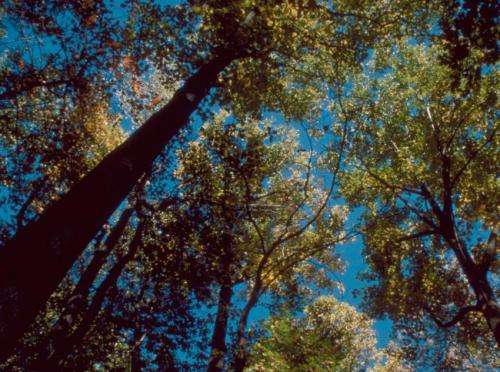 Climate change not responsible for altering forest tree composition