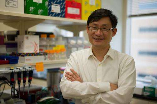 Newly discovered heart molecule could lead to effective treatment for heart failure