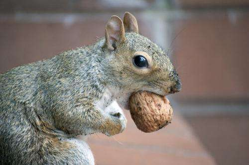 The secret life of squirrels in New York City