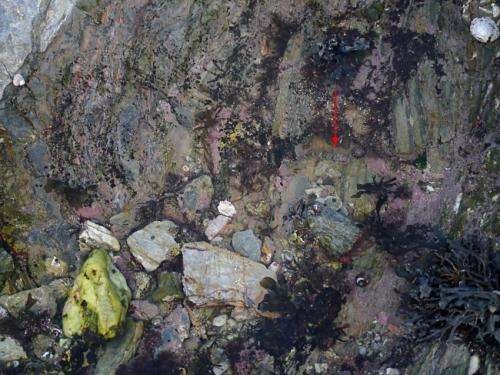 Researchers solve riddle of the rock pools