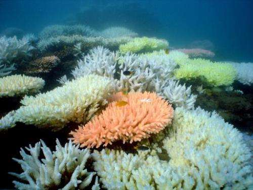File photo shows bleaching on a coral reef at Halfway Island in Australia's Great Barrier Reef