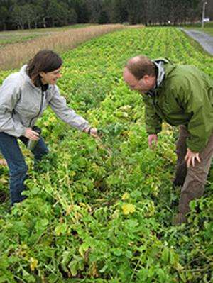 Research reveals true value of cover crops to farmers, environment