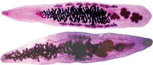 Scientists crack the code of a cancer-causing parasite