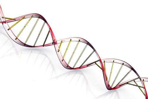 Researchers detect unwanted effects of important gene manipulation system
