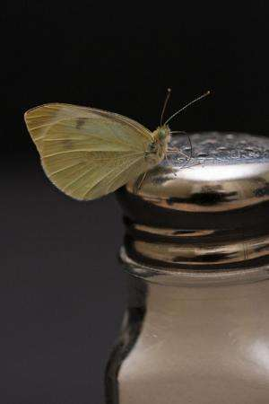 Study investigates impact of road salt on butterflies