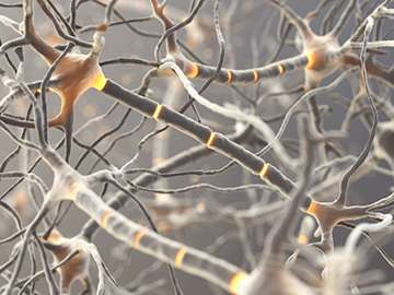 Researchers Find Inherited Pathway of Risk for Schizophrenia