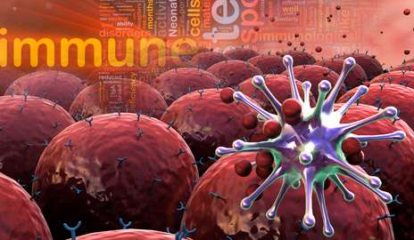 Research team implants human innate immune cells in mice