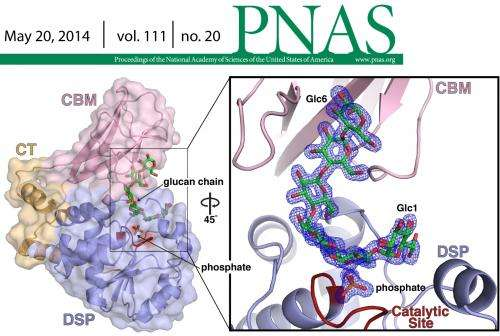 Researchers decode activity of starch modifying enzyme to provide opportunities across industries