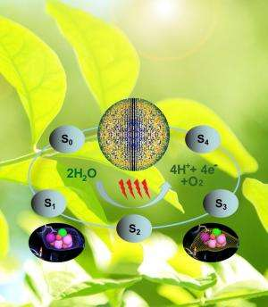 Study yields first snapshots of water splitting in photosynthesis