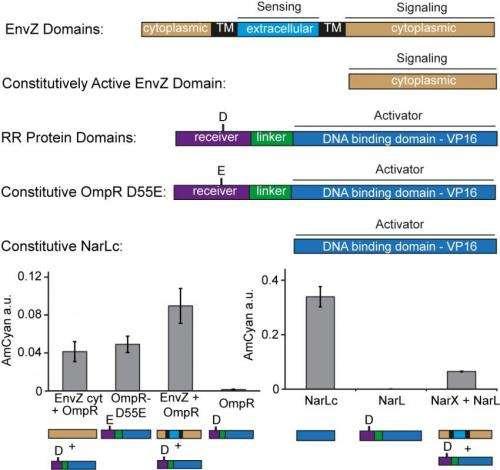 Activity of mutant TCS components