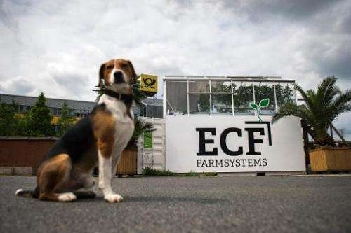 A dog sits in front of a shipping container with a green house built as part of the ECF Containerfarming company on top at an in