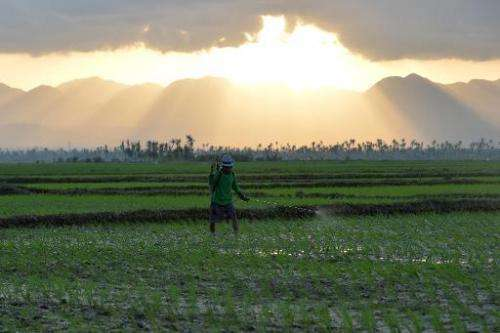 A farmer sprays pesticide on a rice field as the sun sets in Santa Fe, central Philippines on February 17, 2014