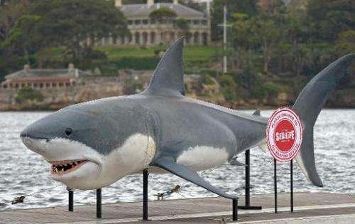 A gigantic 7.4 metre Great White Shark replica in Sydney Harbour on November 26, 2013