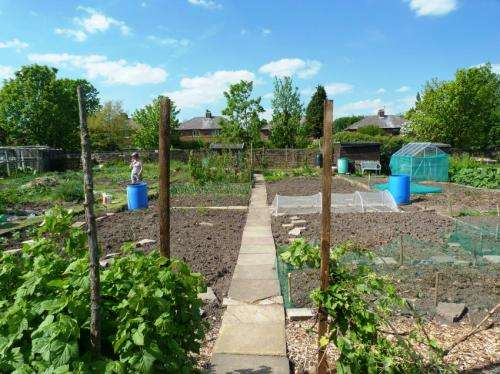 Allotments yield food and healthy soil, study finds