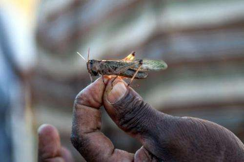 A locust plague is threatening the crops of 13 million farmers in Madagascar