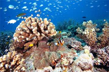 Ancient reefs preserved tropical marine biodiversity