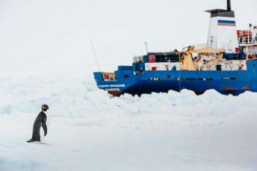 A penguin stands near the MV Akademik Shokalskiy (R), shown stuck in the ice off East Antarctica, December 31, 2013