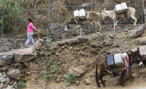 A resident arrives with her donkeys to fill containers with water at a public water pump in Mexico City on April 29, 2014