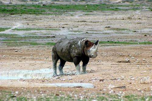 A rhino in the Etosha National park, Namibia on March 4, 2007