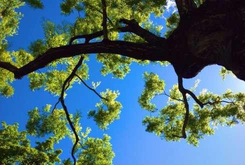 Arnhem plants the world's first 'urban climate tree'