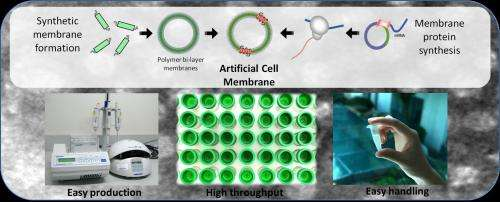 Artificial cell membranes that can speed up drug discovery