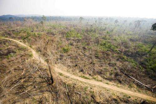 A sector of the Amazon forest, in the state of Para, Brazil, that was illegally deforested, November 29, 2009