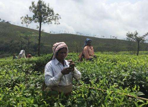 A tea estate worker receives an SMS alert on an estate in a remote location in Valparai, in southern India's Tamil Nadu state, o