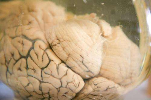 A tiny molecule may help battle depression