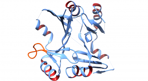 Bacterial superbug protein structure solved