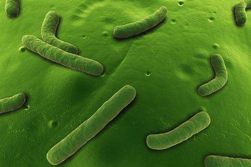Bacteria's game of 'Telephone' foils microbiologists' eavesdropping