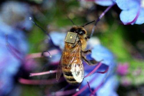 Bee sensors take flight to help farmers